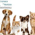 IL RINNOVO DELLA CONVENZIONE PER LA GESTIONE DEL CANILE E GATTILE NEL PROSSIMO CONSIGLIO COMUNALE