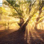 A Montemurlo nascerà un Bosco Sacro, alberi al posto delle tombe