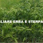 Terreni incolti, il Comune sollecita i privati a tagliare erba e sterpaglie in città e in collina