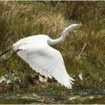 Nelle casse d'espansione nasce una piccola oasi naturalistica e ritornano piante e animali della palude