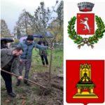 Piantato un ulivo come segno di amicizia con la città russa di Tver
