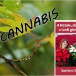 Nota di San Patrignano sull'inserimento della Cannabis Light nella manovra finanziaria