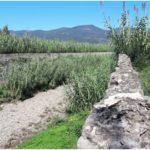 A Montemurlo è partito lo sfalcio dell'erba sui marciapiedi e sugli argini dei torrenti