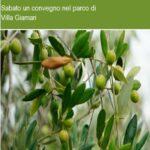 """""""Olivicoltura moderna, biodiversità e l'olivo di Montemurlo"""", sabato un convegno nel parco di Villa Giamari"""