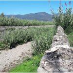 È iniziato lo sfalcio dell'erba lungo i corsi d'acqua
